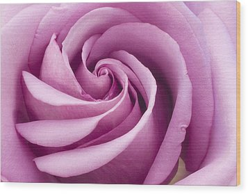 Pink Rose Folded To Perfection Wood Print by Sandra Foster