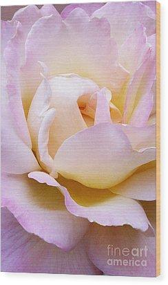 Pink Rose Forming Wood Print by Paul Clinkunbroomer
