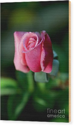 Pink Rose From The Myst Wood Print by Wernher Krutein