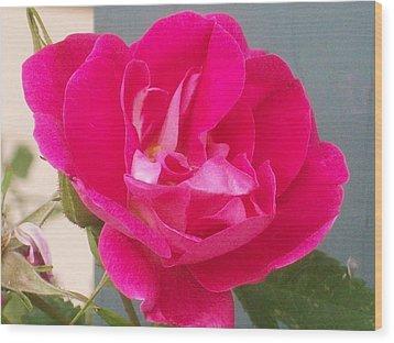 Pink Rose Wood Print by Jewel Hengen