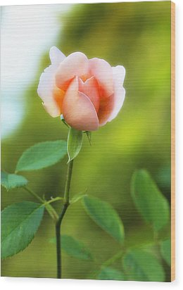 Wood Print featuring the photograph Pink Rose by Jim Poulos
