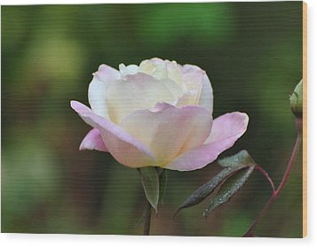 Wood Print featuring the photograph Pink Rose by Jodi Terracina