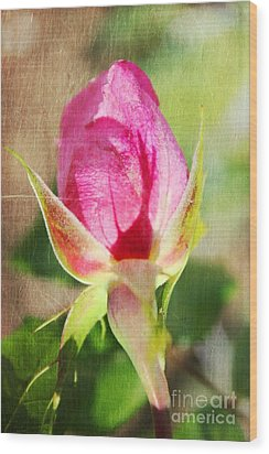 Pink Rose Wood Print by Judy Palkimas