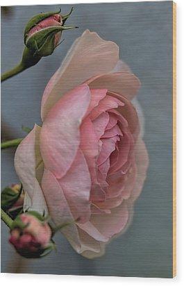 Pink Rose Wood Print by Leif Sohlman