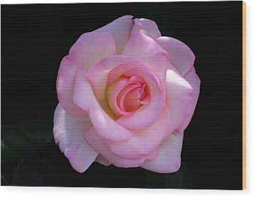 Pink Rose On Black Wood Print by David Rizzo