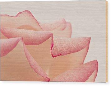 Pink Rose Petals Up Close Wood Print