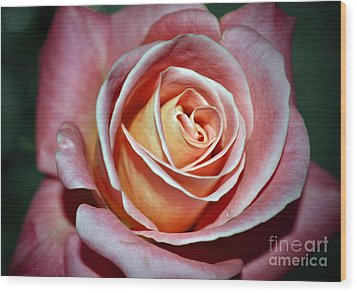 Wood Print featuring the photograph Pink Rose by Savannah Gibbs