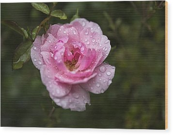 Pink Rose With Raindrops Wood Print