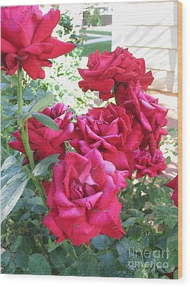 Wood Print featuring the photograph Pink Roses by Chrisann Ellis