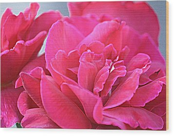 Pink Roses Wood Print by Donna G Smith