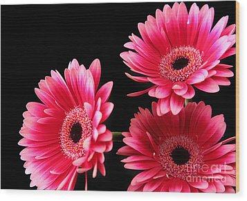 Pink Sisters Wood Print by Eden Baed
