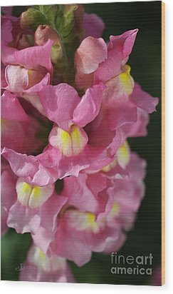 Pink Snapdragon Flowers Wood Print by Joy Watson