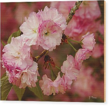 Pink Spring Blossoms Wood Print by James C Thomas