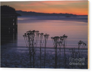 Pink Sunset Wood Print by Arlene Sundby