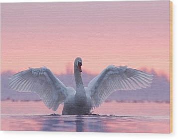 Pink Swan Wood Print