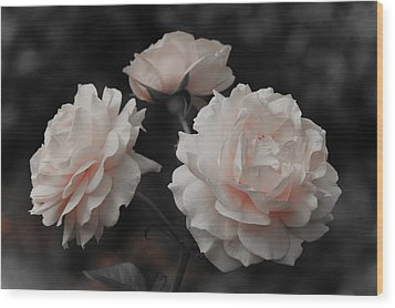 Wood Print featuring the photograph Pink Trio by Michelle Joseph-Long