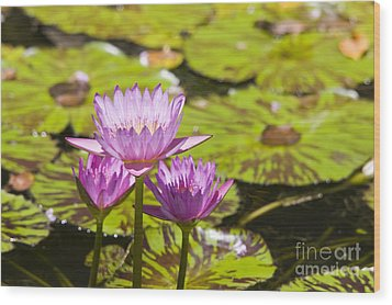 Pink Tropical Water Lilly Wood Print