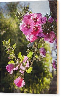 Pink Trumpet Wood Print