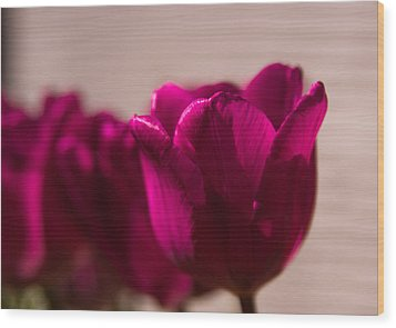 Wood Print featuring the photograph Pink Tulip by Erin Kohlenberg