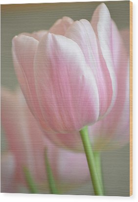 Pink Tulip Floral Wood Print by P S