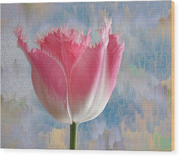 Pink Tulip Wood Print by Mark Greenberg