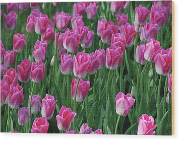 Wood Print featuring the photograph Pink Tulips 2 by Allen Beatty