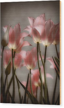 Pink Tulips Glow Wood Print by Michelle Joseph-Long