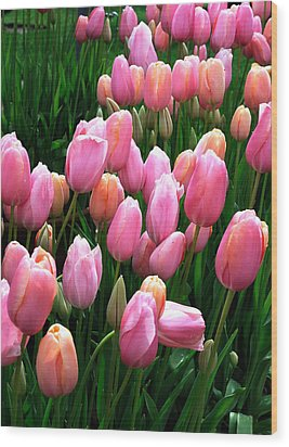 Wood Print featuring the photograph Pink Tulips by Haleh Mahbod