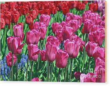 Pink Tulips Wood Print by Tap On Photo