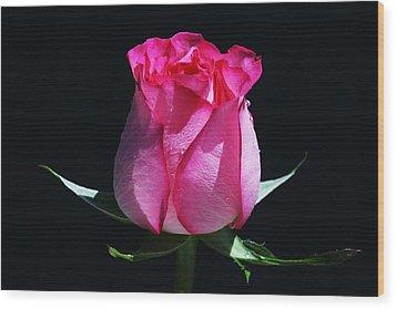 Wood Print featuring the photograph Pink Upstart by Doug Norkum