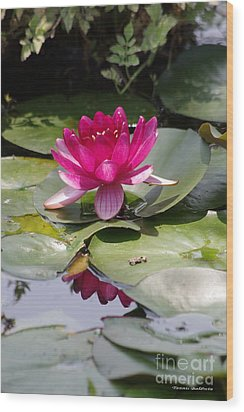 Pink Water Lily Wood Print by Tannis  Baldwin