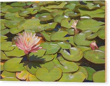 Pink Waterlilies In Koi Pond Wood Print by Cliff Wassmann