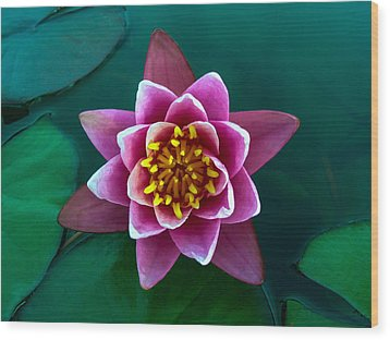 Rose Waterlily Wood Print by Allan Levin