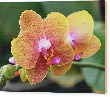 Pink Yellow Orchid Wood Print by Rona Black
