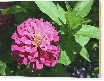 Wood Print featuring the photograph Pink Zinnia by Ellen Tully