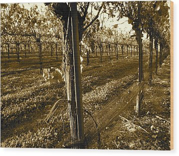 Wood Print featuring the photograph Pinot Growth by Paul Foutz