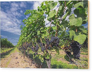 Pinot Noir Grapes In Niagara Wood Print by Charline Xia