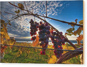 Pinot On The Vine Wood Print by Walter Arnold