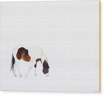 Pinto Pony Wood Print by Theresa Tahara