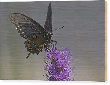 Pipevine Alights Wood Print