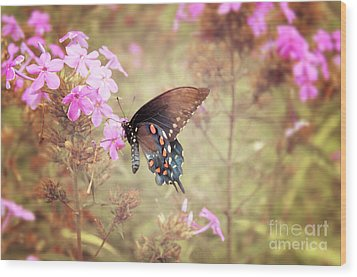 Pipevine Swallowtail Butterfly Wood Print by Lena Auxier