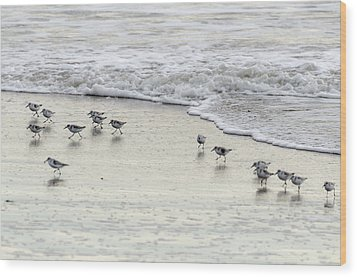 Piping Plovers At Water's Edge Wood Print