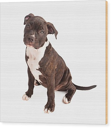 Pit Bull Puppy Black And White Wood Print by Susan Schmitz