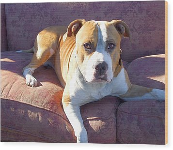 Pitbull On A Couch Wood Print by Ritmo Boxer Designs