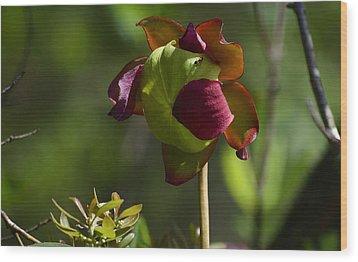 Pitcher Plant Flower 1 Wood Print
