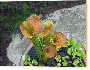Wood Print featuring the photograph Pitcher Plants by Allen Carroll