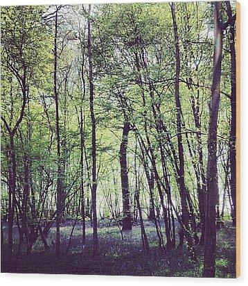 Pittswood Bluebells  Wood Print