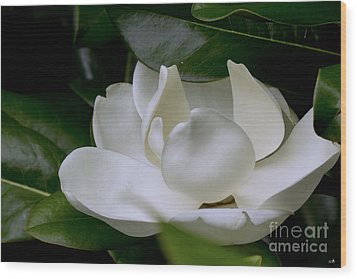 Plain Magnolia Wood Print