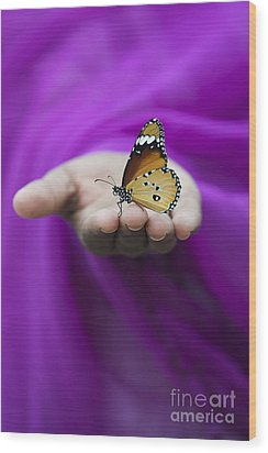 Plain Tiger Butterfly Wood Print by Tim Gainey