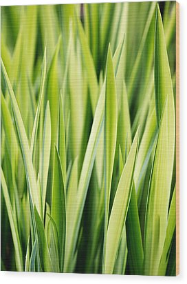 Plant Abstract 3 Wood Print by Rebecca Cozart